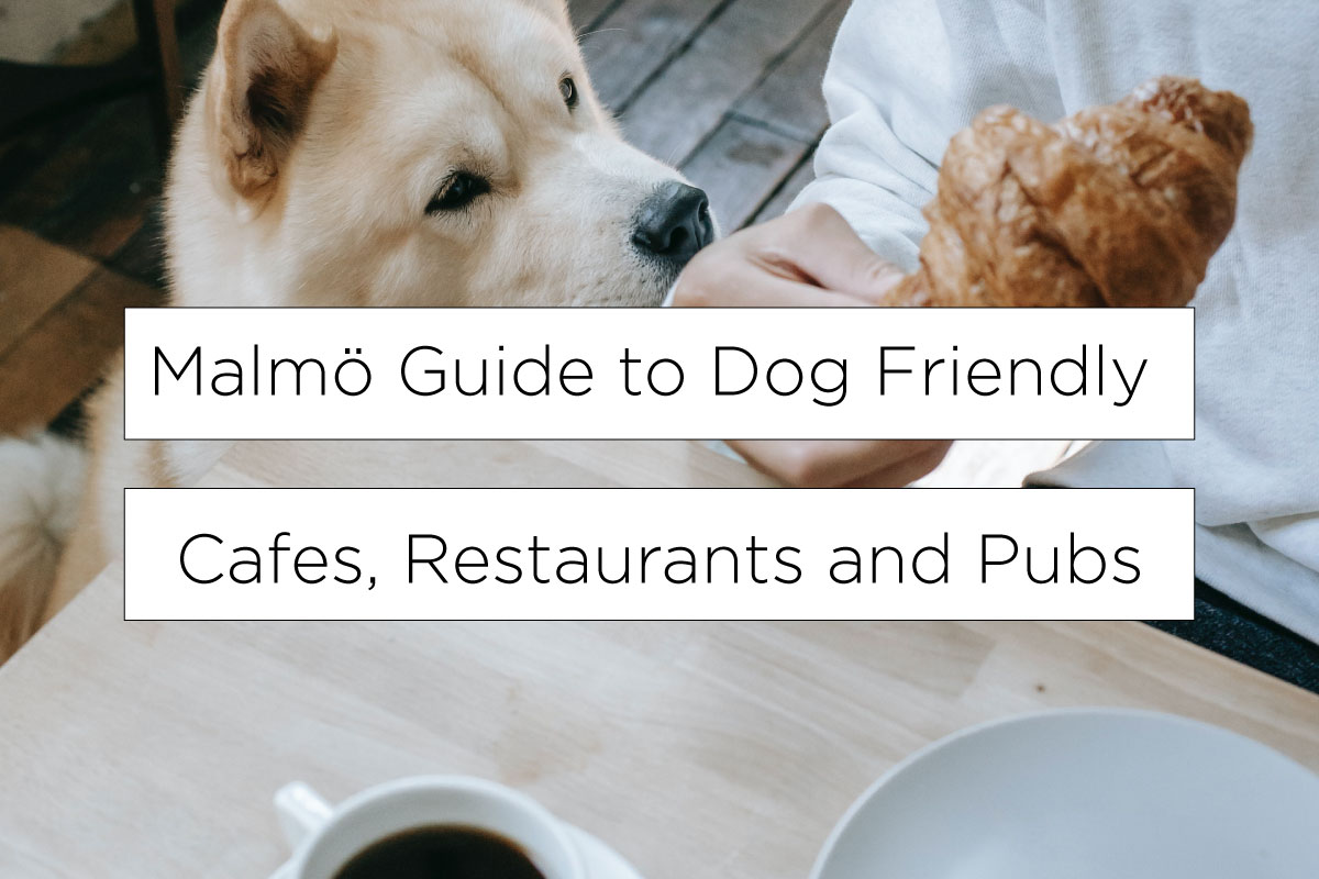 Best in Malmö guide to dog friendly cafes, restaurants and pubs